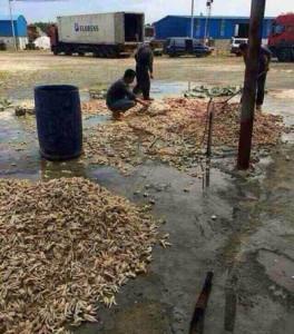 Chân gà bẩn được chế biến ngay trên sân đất.