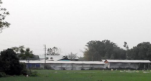 Tòan cảnh khu chăn nuôi và trồng nấm